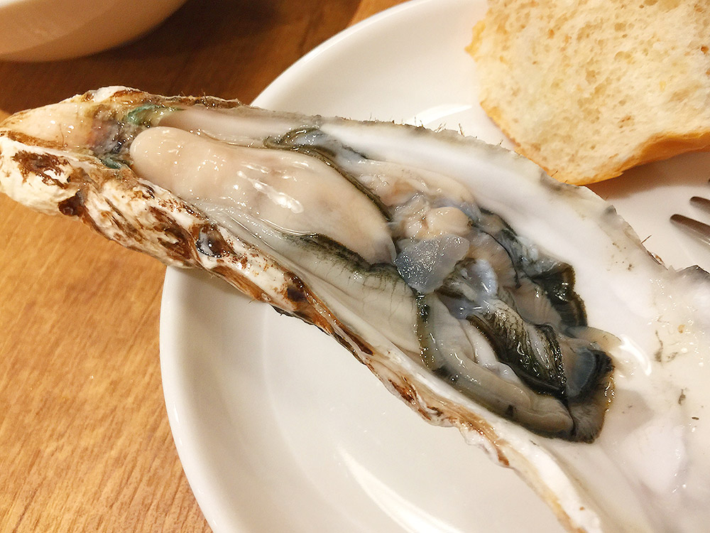 oyster14